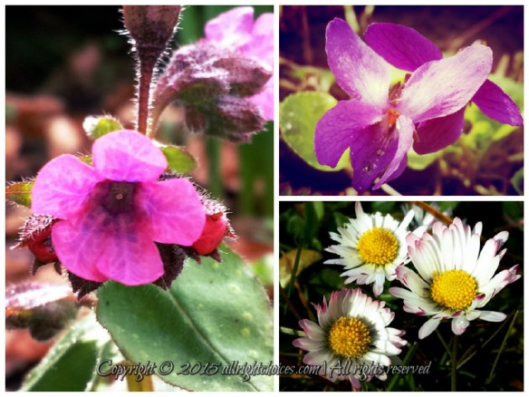 Nature's Color of Choice: Purple