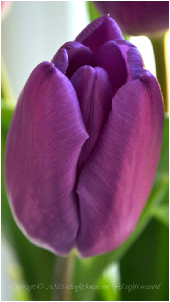 purpletulip