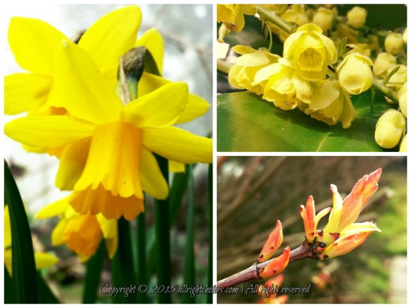 Nature's Color of Choice: Yellow