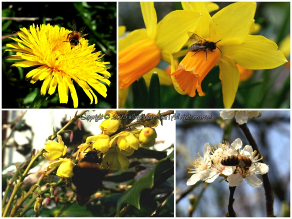 bees flowers