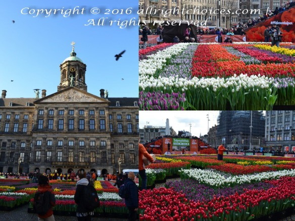 National Tulip Day Jan 16 2016 - Dam Square Amsterdam
