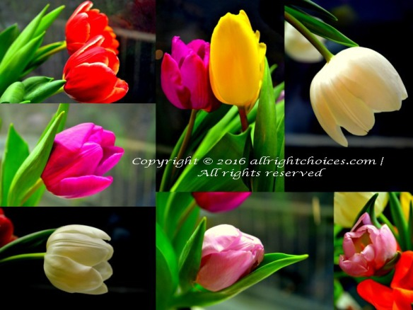 National Tulip Day Jan 16 2016 Tulips
