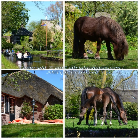 giethoorn houses and horses