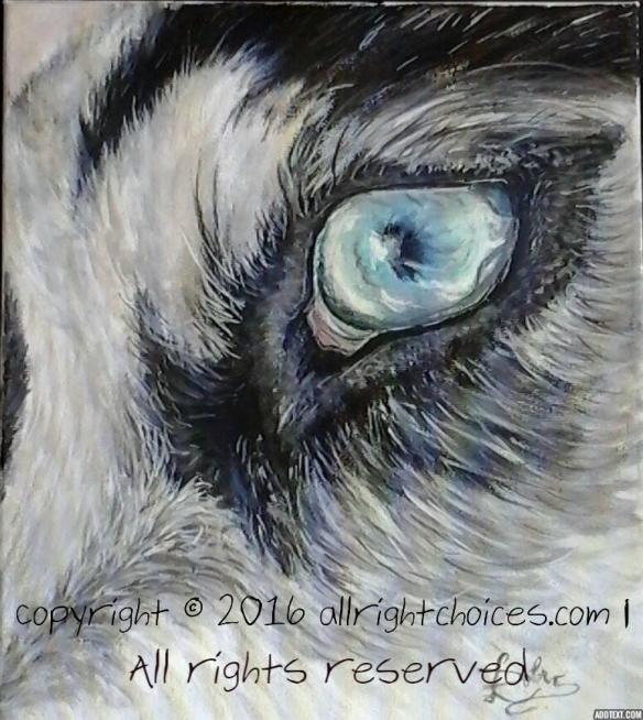 husky eye.jpg