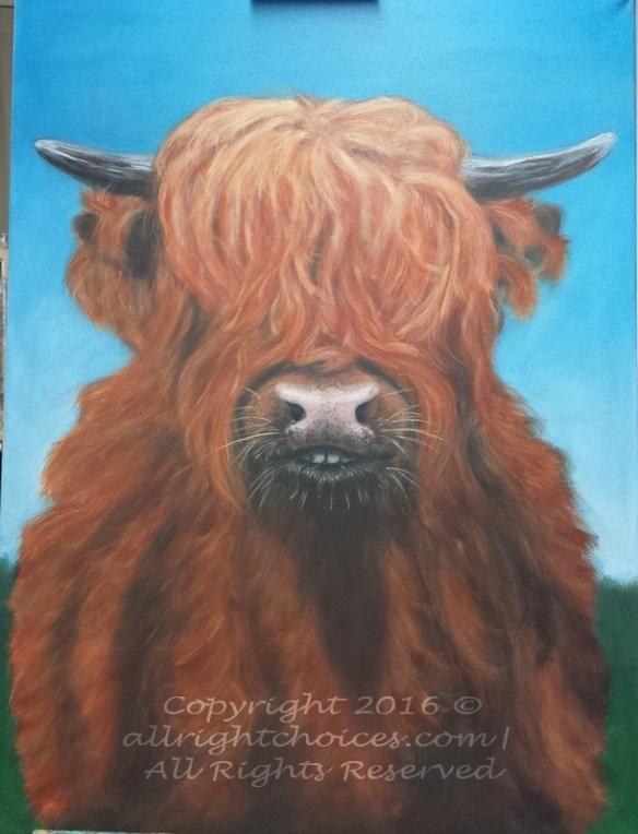 highlander-cow