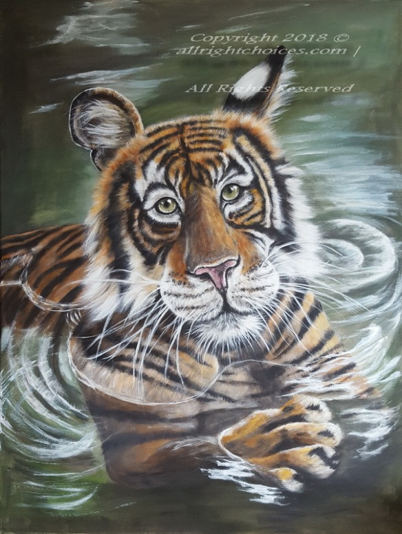 tiger big cat water allrc
